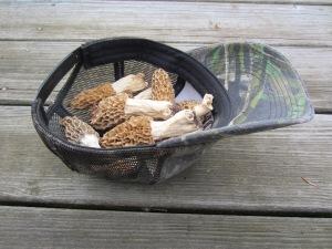 A Hat Full of Morels